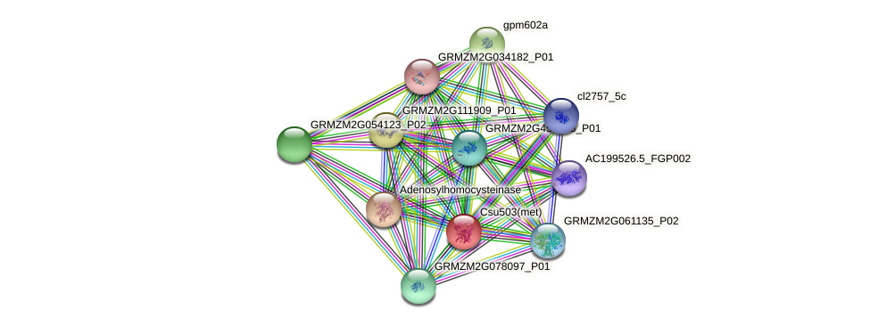 GRMZM2G149751_P05 protein (Zea mays) - STRING interaction network