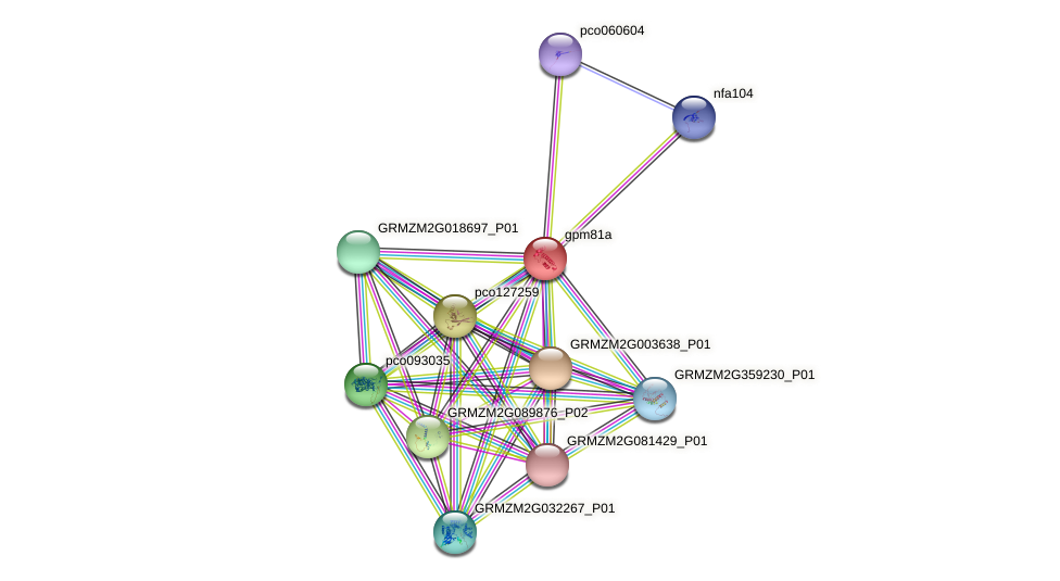 GRMZM2G149775_P01 protein (Zea mays) - STRING interaction network