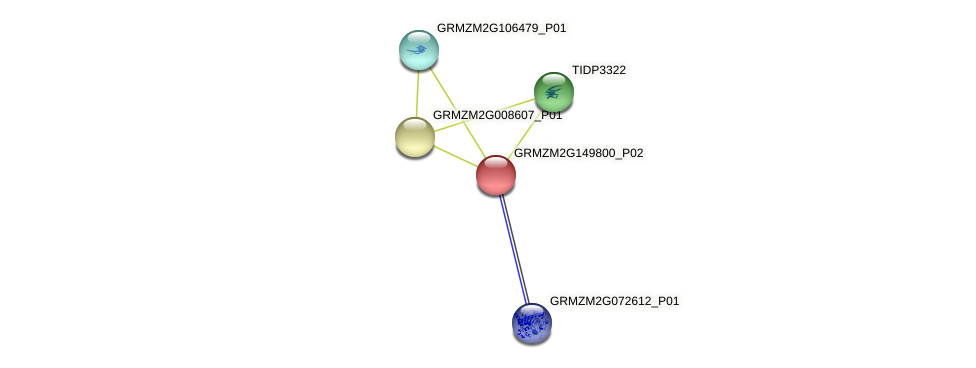 GRMZM2G149800_P02 protein (Zea mays) - STRING interaction network