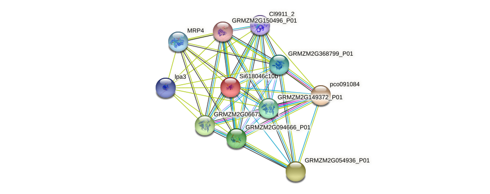 GRMZM2G149903_P01 protein (Zea mays) - STRING interaction network
