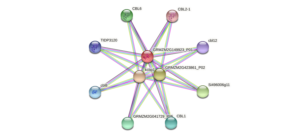 Zm.23479 protein (Zea mays) - STRING interaction network