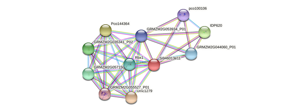 GRMZM2G149979_P02 protein (Zea mays) - STRING interaction network
