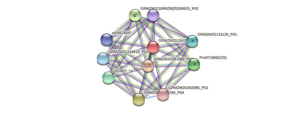 GRMZM2G150209_P02 protein (Zea mays) - STRING interaction network
