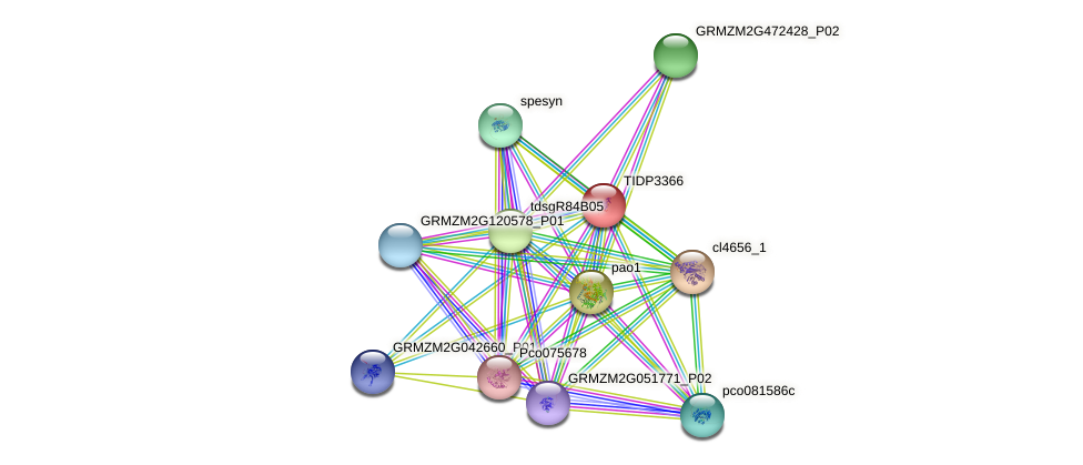 TIDP3366 protein (Zea mays) - STRING interaction network