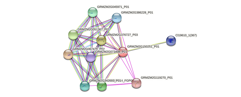 GRMZM2G150251_P01 protein (Zea mays) - STRING interaction network