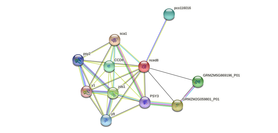 GRMZM2G150363_P01 protein (Zea mays) - STRING interaction network