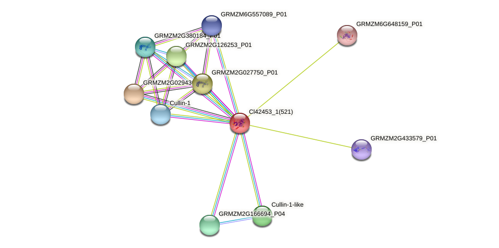 pza02266 protein (Zea mays) - STRING interaction network