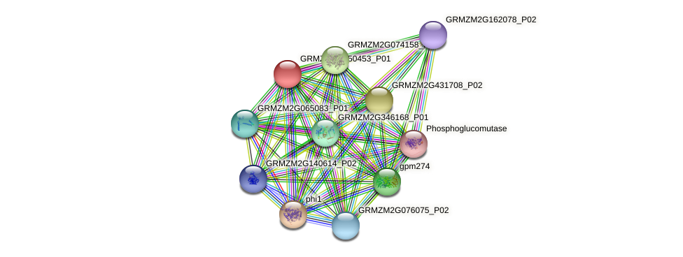 GRMZM2G150453_P01 protein (Zea mays) - STRING interaction network