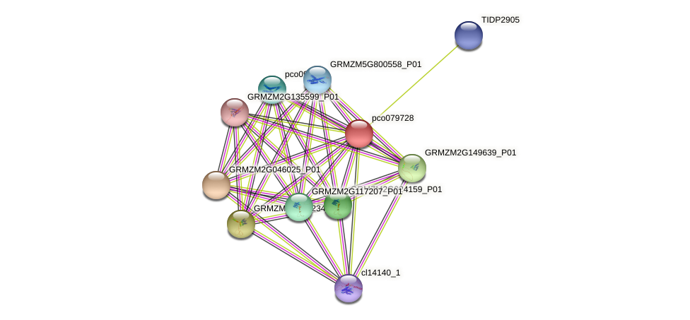 pco079728 protein (Zea mays) - STRING interaction network