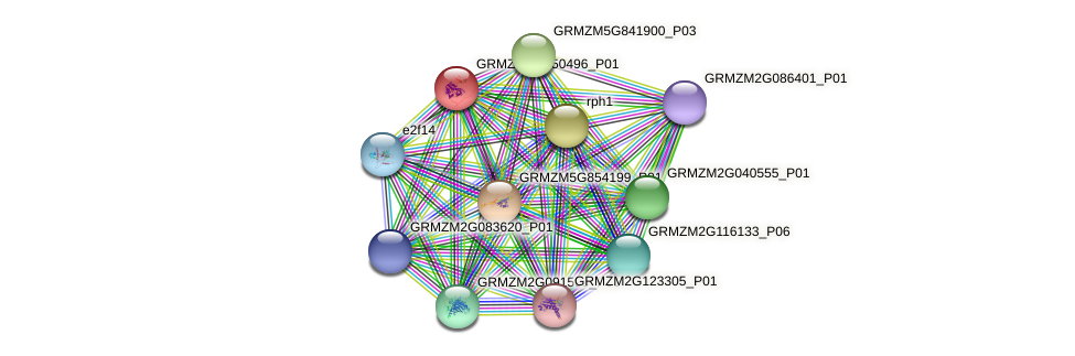 GRMZM2G150496_P01 protein (Zea mays) - STRING interaction network
