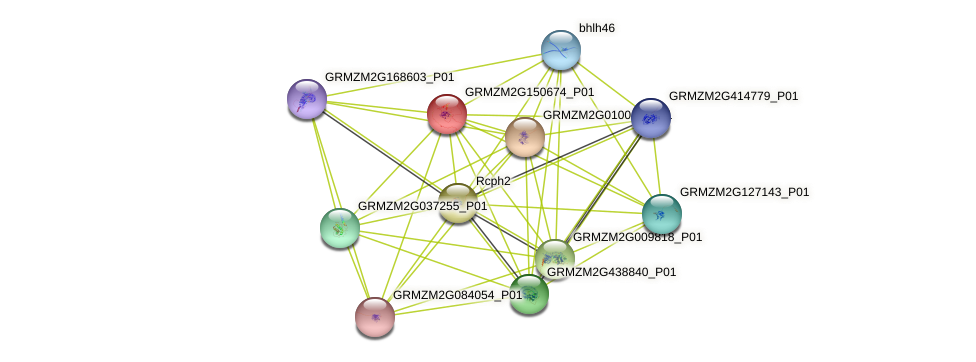 GRMZM2G150674_P01 protein (Zea mays) - STRING interaction network