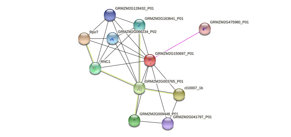 GRMZM2G150697_P01 protein (Zea mays) - STRING interaction network