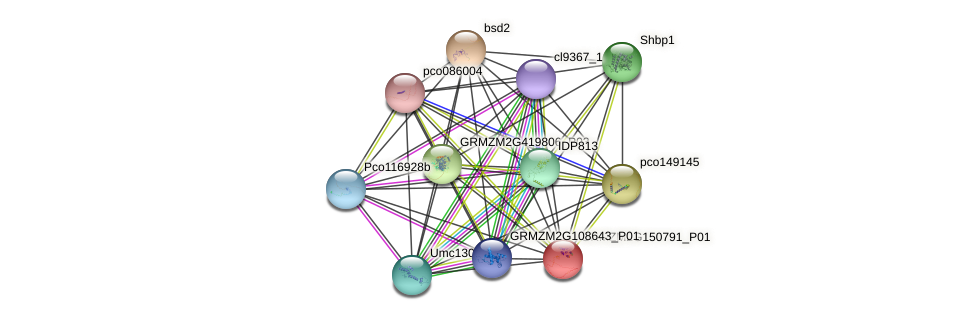 GRMZM2G150791_P01 protein (Zea mays) - STRING interaction network