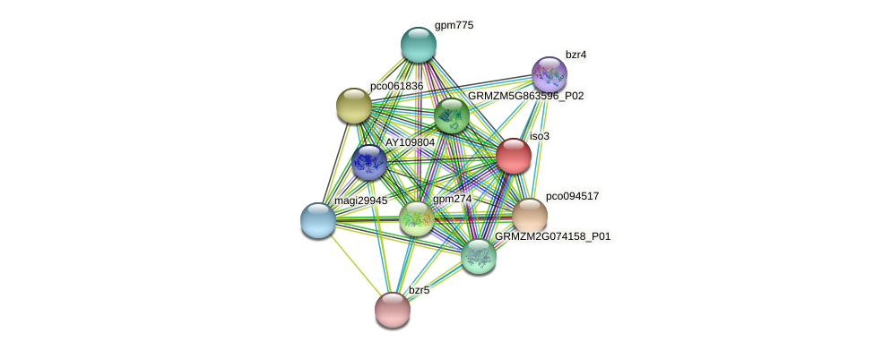 iso3 protein (Zea mays) - STRING interaction network