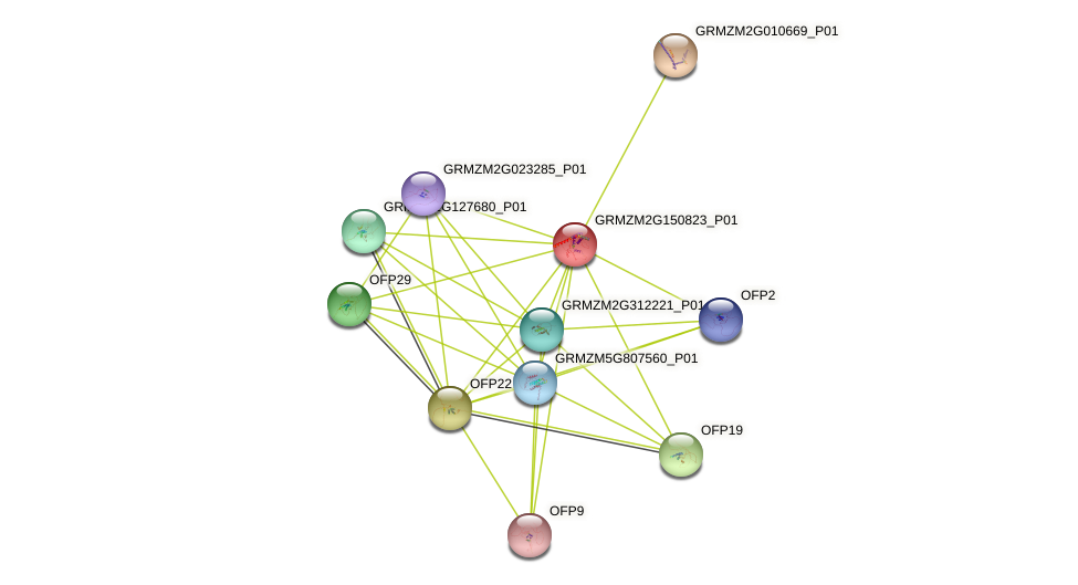 ofp20 protein (Zea mays) - STRING interaction network