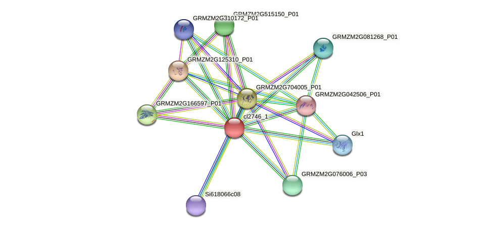 cl2746_1 protein (Zea mays) - STRING interaction network
