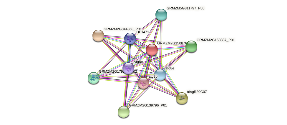 GRMZM2G150876_P02 protein (Zea mays) - STRING interaction network