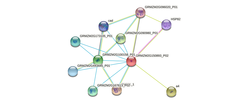 GRMZM2G150893_P02 protein (Zea mays) - STRING interaction network