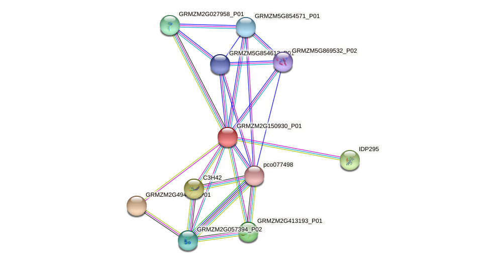 GRMZM2G150930_P01 protein (Zea mays) - STRING interaction network