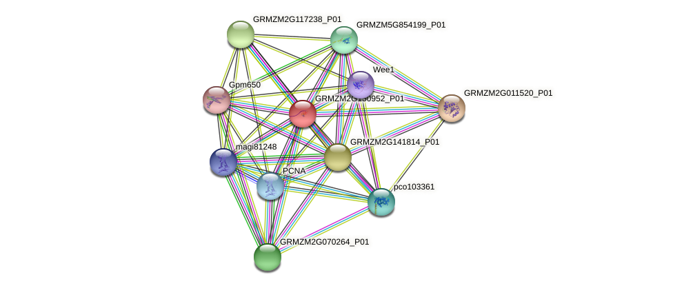 GRMZM2G150952_P01 protein (Zea mays) - STRING interaction network