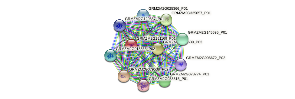 GRMZM2G151169_P01 protein (Zea mays) - STRING interaction network
