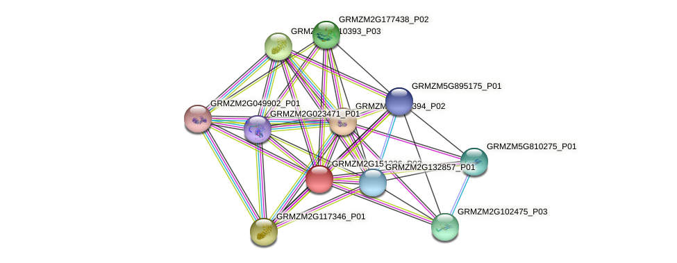 GRMZM2G151236_P01 protein (Zea mays) - STRING interaction network