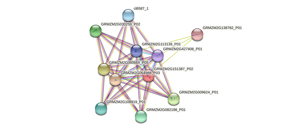 GRMZM2G151387_P01 protein (Zea mays) - STRING interaction network