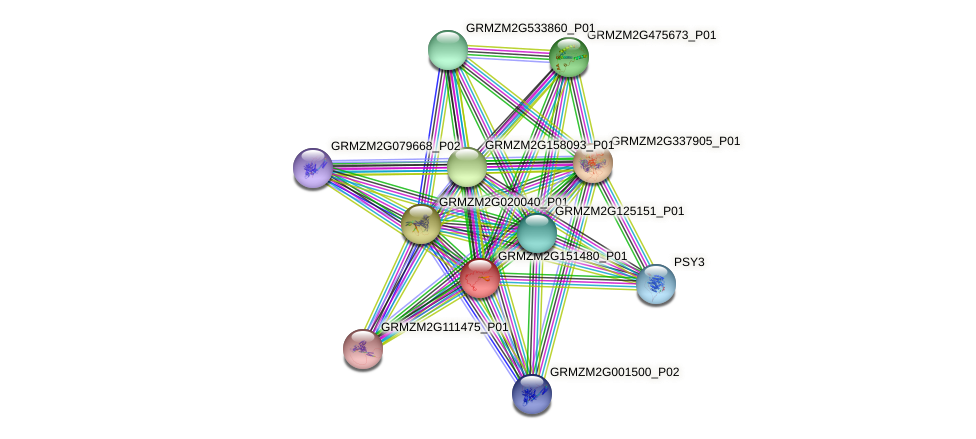 GRMZM2G151480_P01 protein (Zea mays) - STRING interaction network