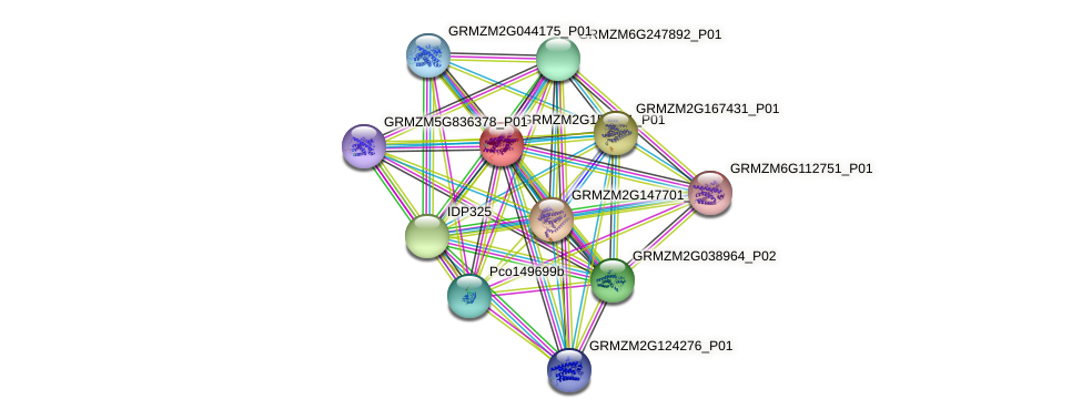 GRMZM2G151521_P01 protein (Zea mays) - STRING interaction network