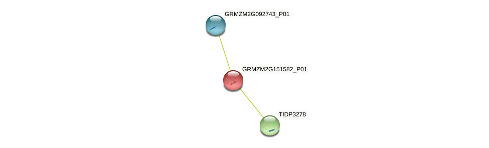 GRMZM2G151582_P01 protein (Zea mays) - STRING interaction network