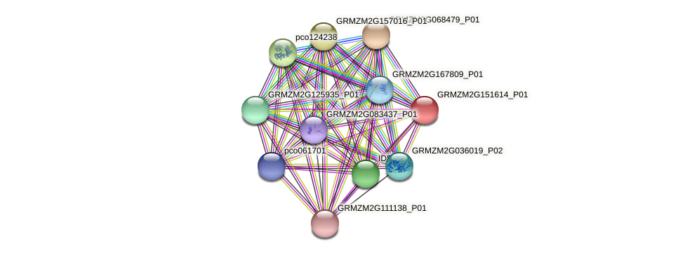 Zm.22422 protein (Zea mays) - STRING interaction network