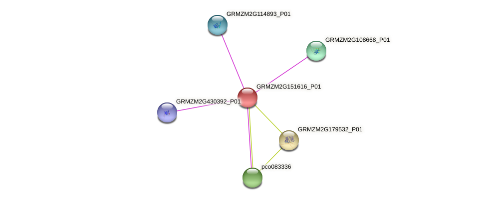 GRMZM2G151616_P01 protein (Zea mays) - STRING interaction network