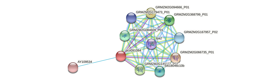 pco091084 protein (Zea mays) - STRING interaction network