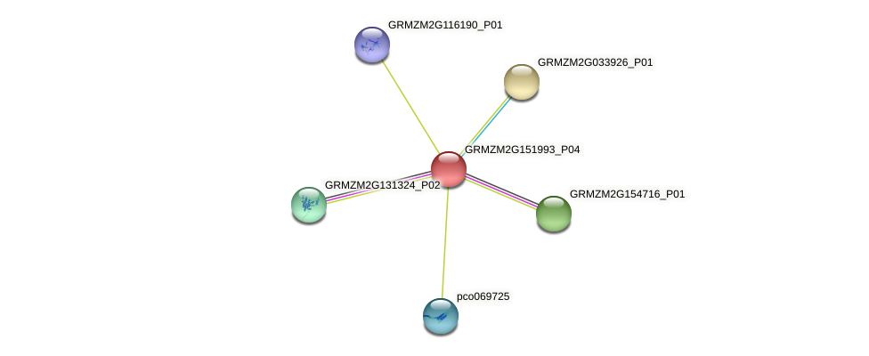GRMZM2G151993_P04 protein (Zea mays) - STRING interaction network