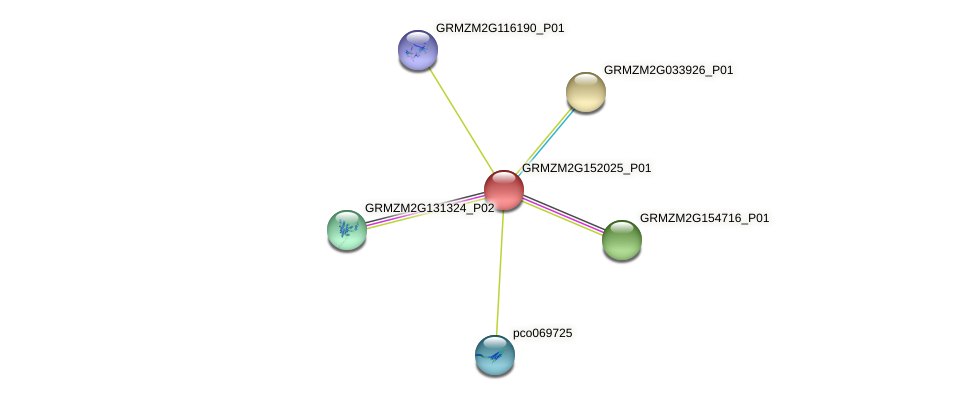 GRMZM2G152025_P01 protein (Zea mays) - STRING interaction network