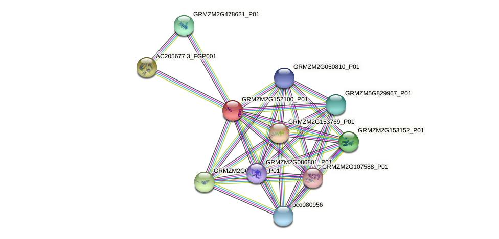 GRMZM2G152100_P01 protein (Zea mays) - STRING interaction network