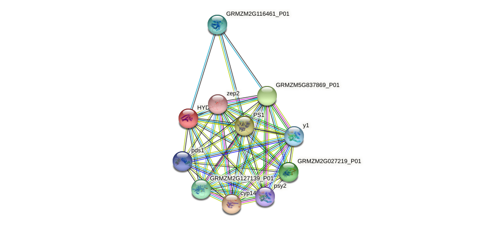 HYD3 protein (Zea mays) - STRING interaction network