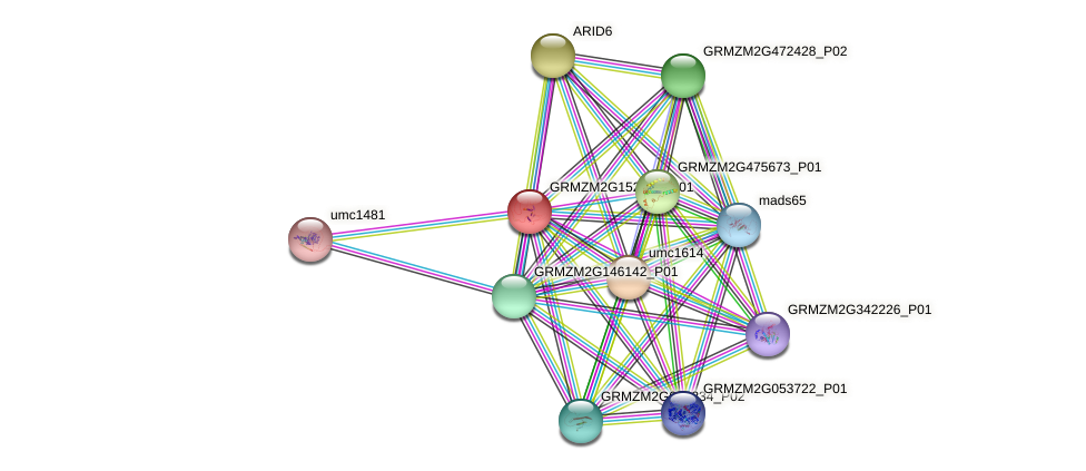 GRMZM2G152214_P01 protein (Zea mays) - STRING interaction network
