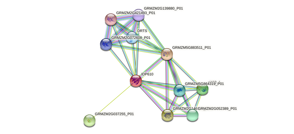 IDP610 protein (Zea mays) - STRING interaction network