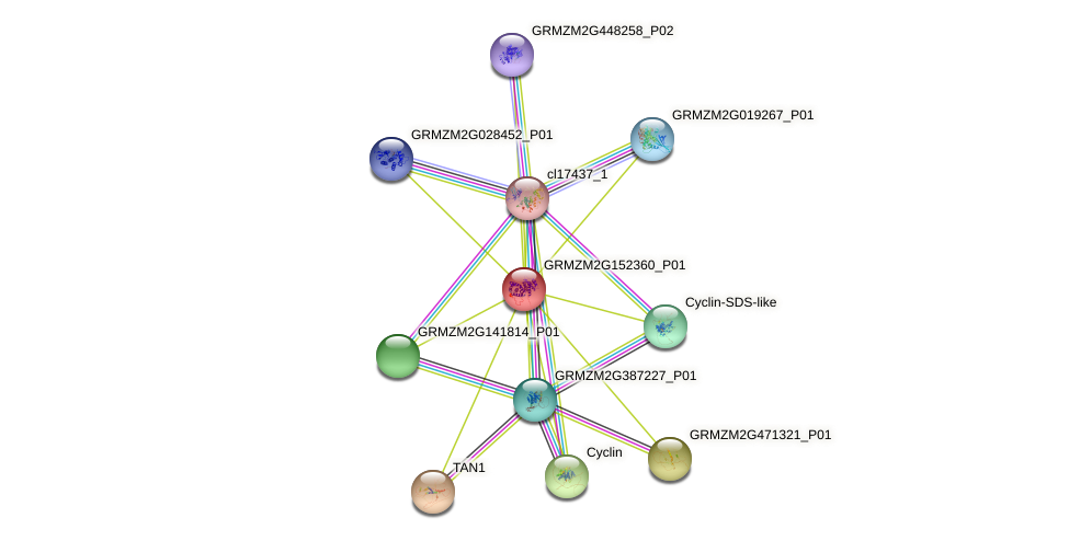 Zm.23875 protein (Zea mays) - STRING interaction network