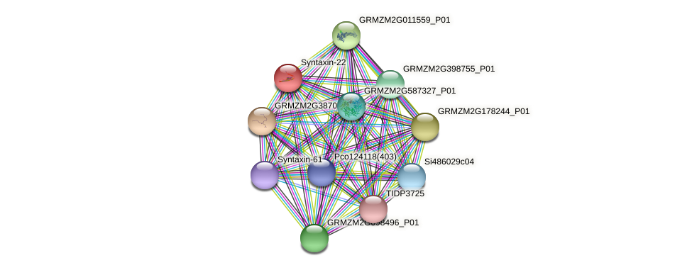 GRMZM2G152411_P01 protein (Zea mays) - STRING interaction network