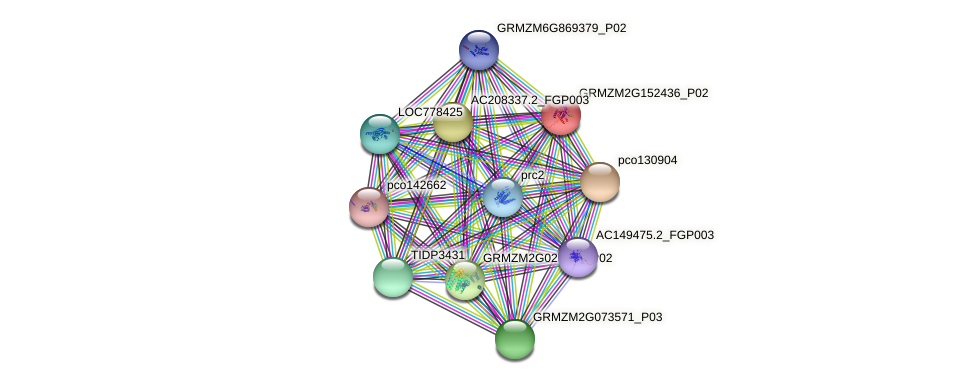 GRMZM2G152436_P02 protein (Zea mays) - STRING interaction network