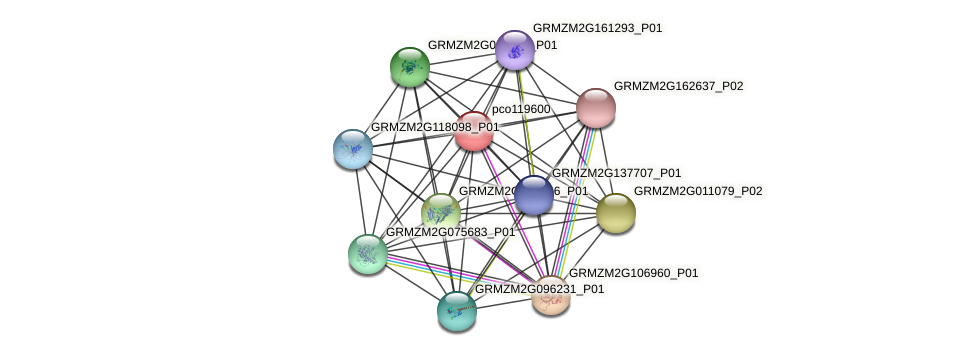 pco119600 protein (Zea mays) - STRING interaction network