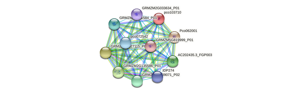 pco103710 protein (Zea mays) - STRING interaction network