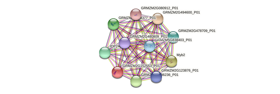 GRMZM2G152553_P01 protein (Zea mays) - STRING interaction network