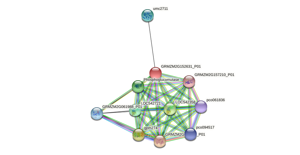 GRMZM2G152631_P01 protein (Zea mays) - STRING interaction network