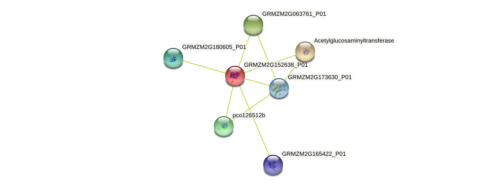 GRMZM2G152638_P01 protein (Zea mays) - STRING interaction network