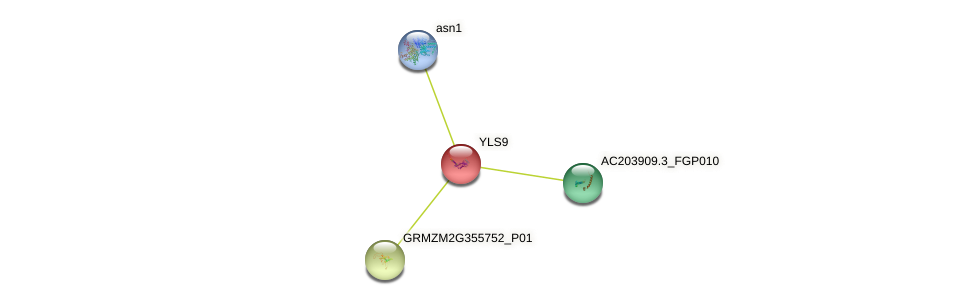 GRMZM2G152781_P01 protein (Zea mays) - STRING interaction network