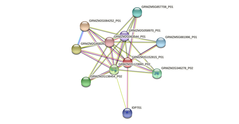 GRMZM2G152815_P01 protein (Zea mays) - STRING interaction network
