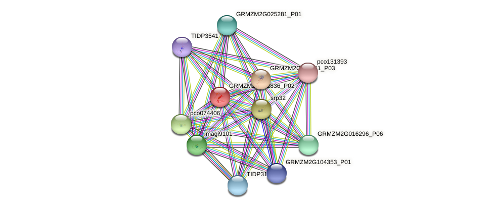 GRMZM2G152836_P02 protein (Zea mays) - STRING interaction network